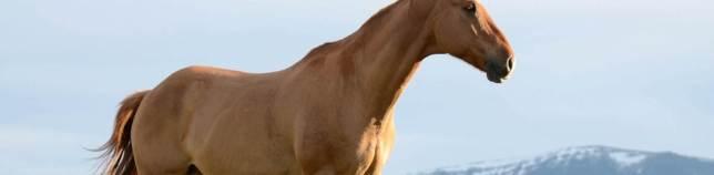 Imagen caballo perfil